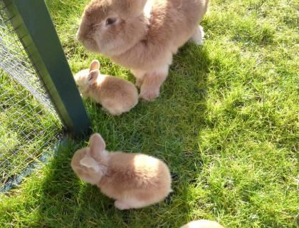 konijnen-min